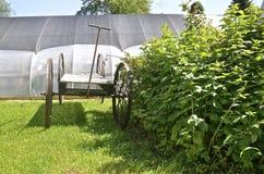 Огромная старая тележка сада Стоковое фото RF