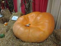 Огромная тыква на дисплее на окружной ярмарке, Аллентаун, Пенсильвании, США стоковое фото