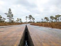 Огромное болото в Латвии стоковое изображение rf