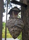 Огромное гнездо бумажной оси прикрепленное к Birdhouse стоковое фото