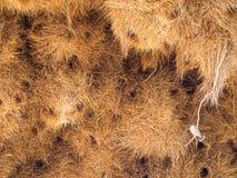 Огромное гнездо птицы ткача в Намибии, Африке Стоковые Изображения