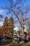 Огромное дерево на виске Zenkoji в Nagano, Японии стоковое фото