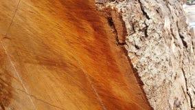 Огромное дерево отрезанное для продукции мебели стоковые изображения