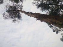Огромное дерево с красивым облачным небом стоковые изображения rf