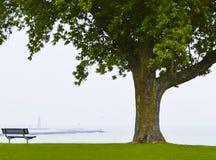 Огромное дерево на портовом районе Стоковые Изображения