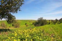 Огромное поле Стоковые Фото