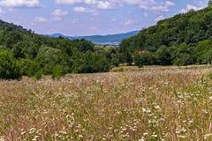 Огромное число различных одичалых wildflowers и кустарников против фона малого горного села Стоковое Изображение