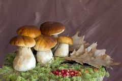 Огромные большие белые грибы стоковые фото