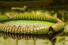 огромные листья стоковое изображение rf