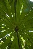 огромные листья Стоковые Изображения RF