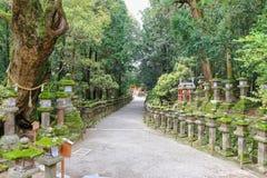 Огромные священные фонарики дерева и камня камфоры водя к Kasuga Sh Стоковые Изображения RF