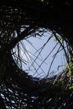 Огромные скульптуры гнезда птицы на парке Стоковая Фотография
