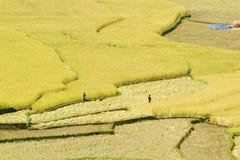 Огромные этапы риса на террасах Стоковое Изображение RF