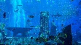 Огромный аквариум заполненный с рыбами Стоковое фото RF