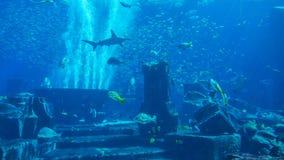Огромный аквариум заполненный с рыбами Стоковая Фотография