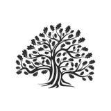 Огромный и священный значок логотипа силуэта дуба изолированный на белой предпосылке Стоковое фото RF