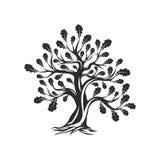 Огромный и священный логотип силуэта дуба изолированный на белой предпосылке Стоковое Изображение RF