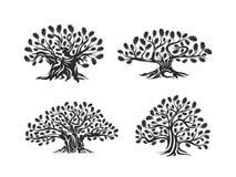 Огромный и священный логотип силуэта дуба изолированный на белой предпосылке Стоковое Фото