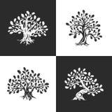 Огромный и священный логотип силуэта дуба изолированный на предпосылке Стоковая Фотография