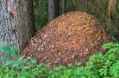 Огромный anthill в лесе стоковое фото rf