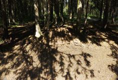 Огромный anthill в лесе стоковые фотографии rf