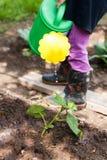Огурец моча чонсервной банкы воды маленькой девочки в саде Стоковая Фотография RF