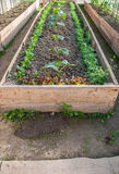 Огурцы в саде Стоковое Изображение RF