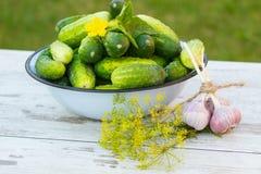 Огурцы в шаре металла и свежем чесноке с укропом в саде на солнечный день Стоковые Фото