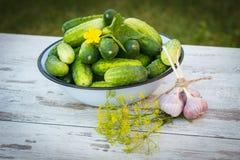 Огурцы в шаре металла и свежем чесноке с укропом в саде на солнечный день Стоковое Фото