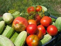 Огурцы и томаты Стоковое Изображение RF