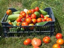 Огурцы и томаты Стоковые Изображения