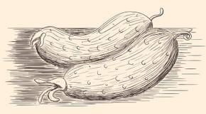 Огурцы нарисованные рукой Стоковые Фотографии RF