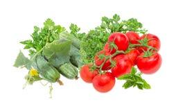Огурцы с стержнем, ветви томатов и зеленые цвета Стоковое Фото