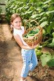огурцы урожая Стоковые Изображения RF