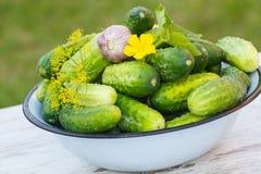 Огурцы, чеснок и укроп в шаре металла в саде на солнечный день Стоковая Фотография