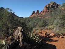 Оглушать Аризона пустыня стоковое изображение