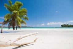 оглушать пляжа тропический Стоковые Изображения