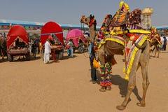 Одевают верблюдов для ярмарки Стоковое Фото