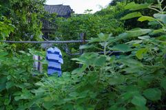 Одежды на бамбуковом сплотке во дворе стоковое фото rf