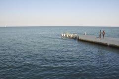 Одесса, к югу от Украины, побережье Чёрного моря, пляж Langeron, 28-ое июня 2018 Люди отдыхают на воде Главным образом пасмурный  стоковые фотографии rf