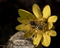 Одетый в цветке стоковое изображение rf