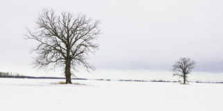 Одинокие деревья Стоковое фото RF