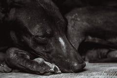 одиночество бездомной собаки Стоковые Фотографии RF
