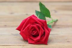 Одиночная красная роза с падением воды на деревянной предпосылке стоковое изображение