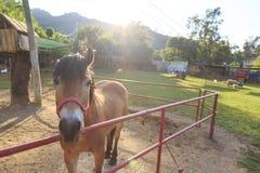 Одиночная лошадь за загородками стоковые изображения rf