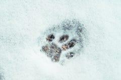 Одиночная печать лапки кота в снеге конспектировала стоковое изображение rf