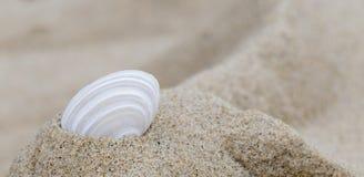 Одиночная раковина в песке Стоковое Изображение
