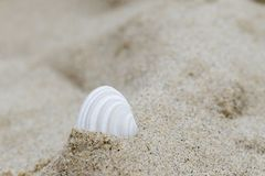 Одиночная раковина в песке Стоковая Фотография