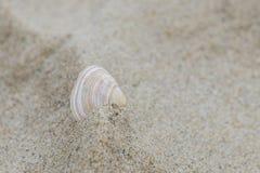 Одиночная раковина в песке Стоковые Изображения