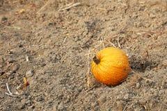 Одиночная тыква в саде Стоковые Фотографии RF